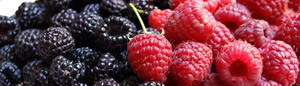 5346478_croppedraspberries (300x86, 19Kb)