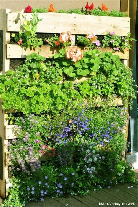 pallets-used-in-the-garden (468x700, 372Kb)