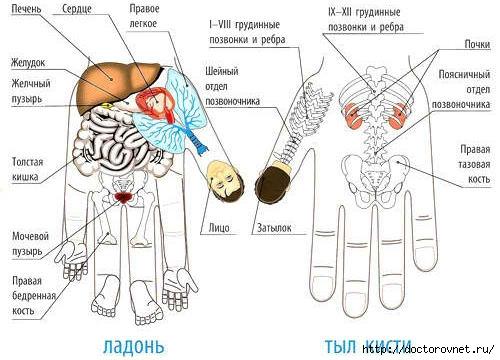 5239983_sootvetstvie_organov_Sy_Djok_Doktor (500x360, 109Kb)
