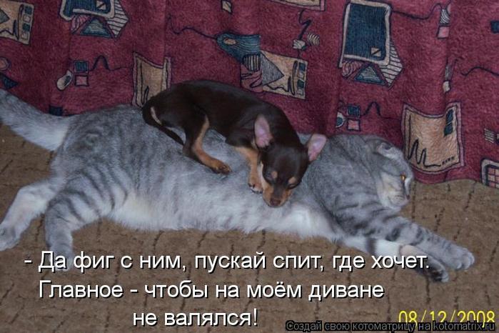 kotomatritsa_3c (500x466, 347Kb)