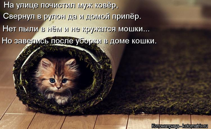 kotomatritsa_b (500x430, 315Kb)