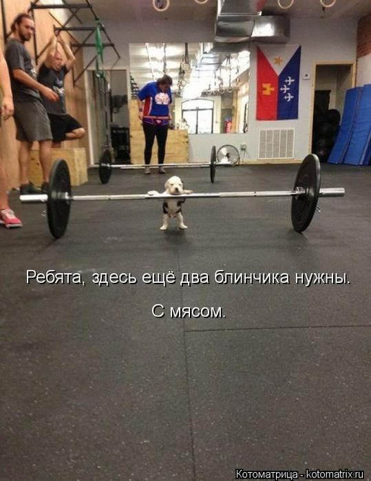 kotomatritsa_fY (539x700, 320Kb)