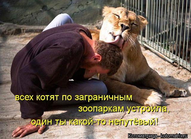 kotomatritsa_Xw (500x466, 278Kb)