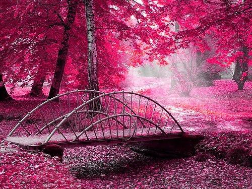 get-edited-image розовая осень (500x375, 129Kb)