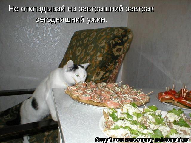 kotomatritsa_m (640x480, 134Kb)