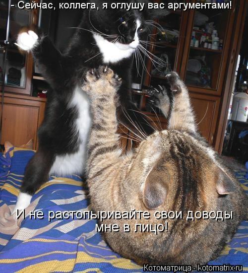 kotomatritsa_Y8 (500x550, 166Kb)
