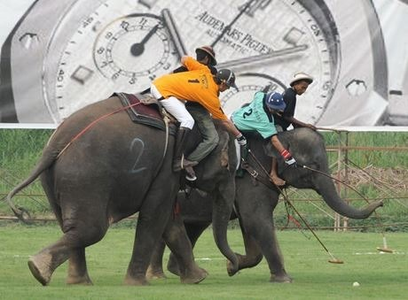 поло на слонах 05