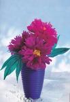 Превью Цветы из креповой (гофрированной) бумаги - журнал (22) (481x700, 231Kb)