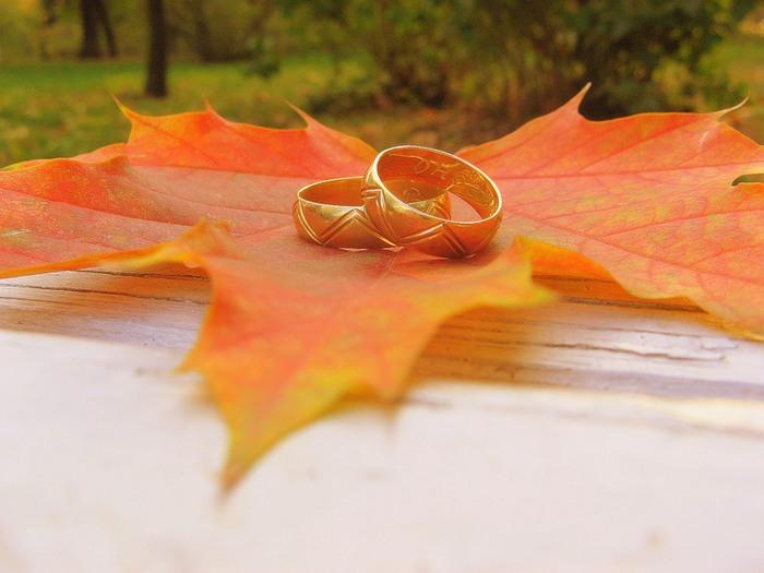 Картинки Клен, дерево, осень, свадьба, кольца, лист, золото обои, фото.