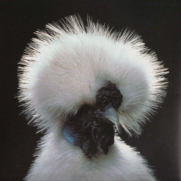 бел красавец (600x600, 236Kb)