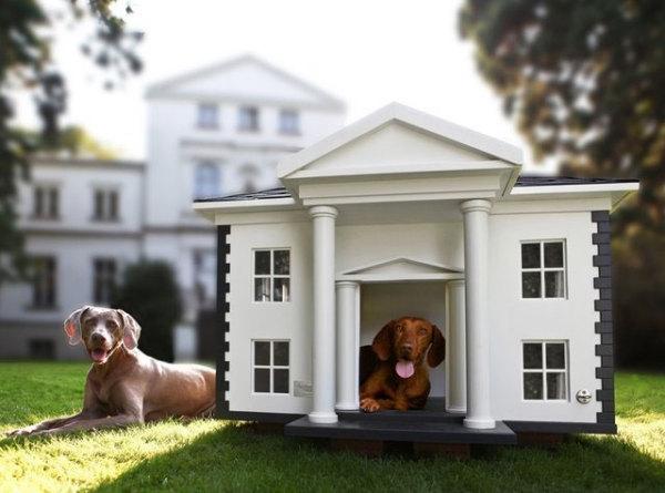 домики для собак фото (600x445, 128Kb)