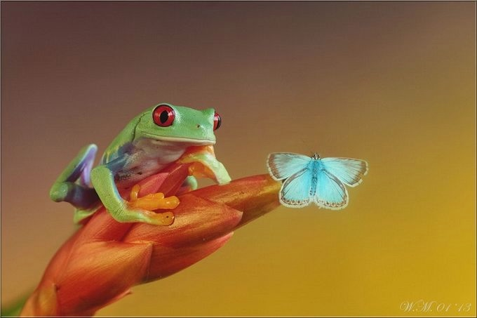 прикольные картинки лягушек:
