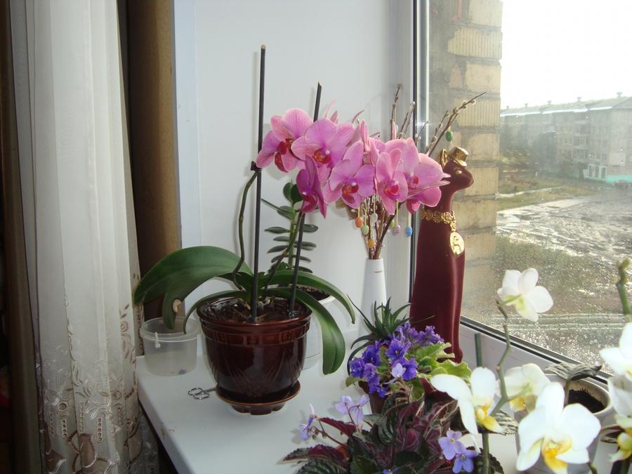 Можно ли сажать орхидею в обычный горшок 3