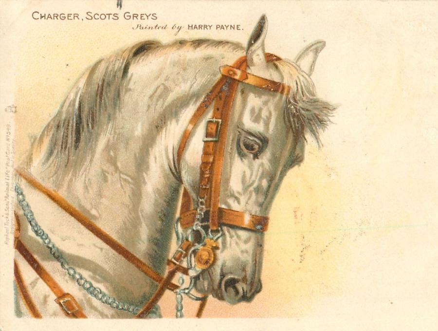 Старинные открытки с лошадьми 55