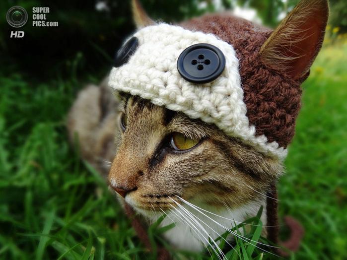Вязаные шапочка кота