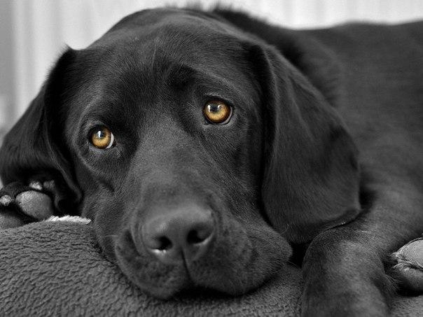 собака (604x453, 53Kb)
