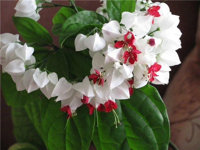 Комнатные цветы уют вашего дома