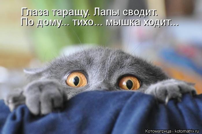 kotomatritsa_3C (700x464, 177Kb)