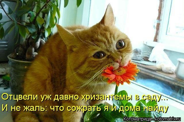 kotomatritsa_6b (640x426, 151Kb)