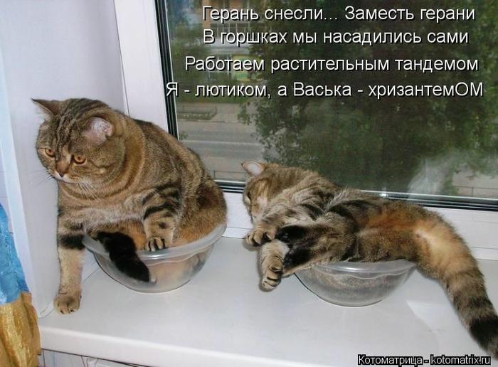 kotomatritsa_aw (700x516, 245Kb)