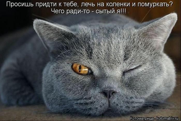 kotomatritsa_ML (700x467, 229Kb)