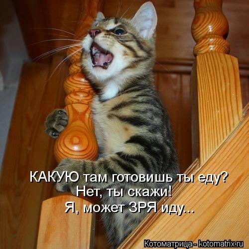 kotomatritsa_ps (500x499, 126Kb)