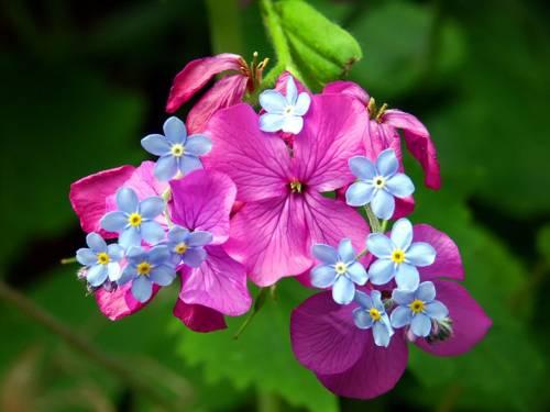 весеннее цветение 1 (500x375, 153Kb)
