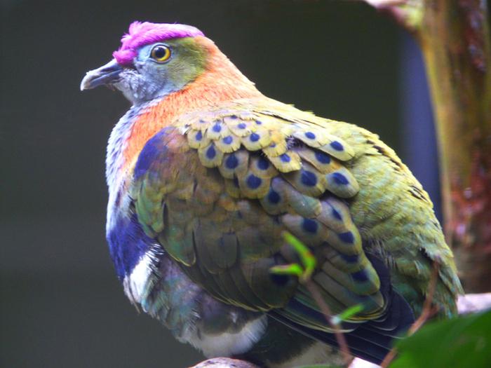 bird-paradise-023 (700x525, 513Kb)