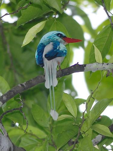 bird-paradise-031 (375x500, 179Kb)