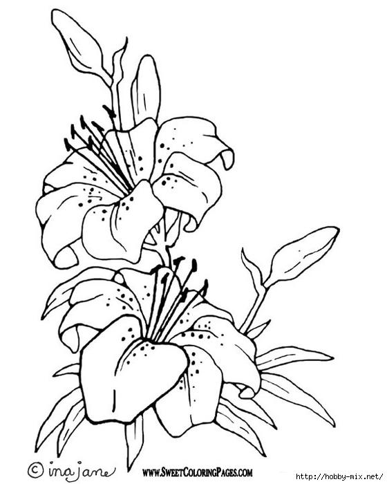 Pagine da colorare tema fiori paperblog - Stampa pagine da colorare dinosauro ...