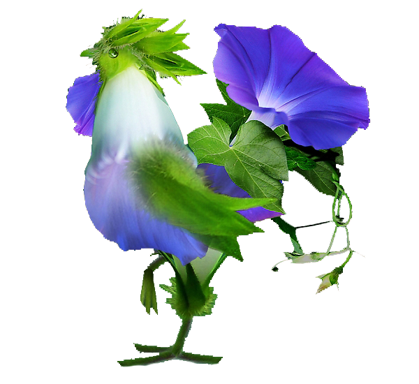 Петух цветок