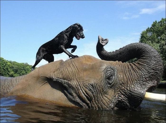 http://img1.liveinternet.ru/images/attach/b/4/105/189/105189813_elephant_and_dog_002.jpg