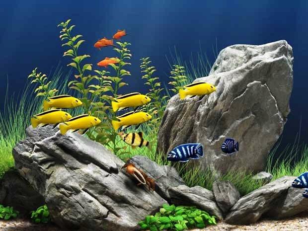Аквариумные рыбки могут творить чудеса!