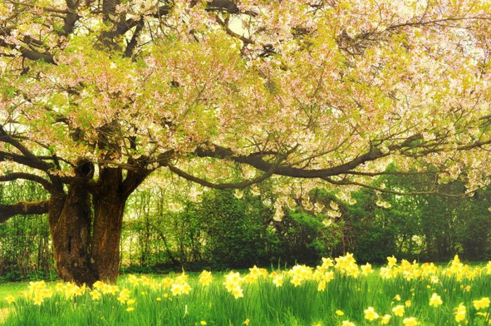 3303834_yellow_spring_9 (700x465, 132Kb)