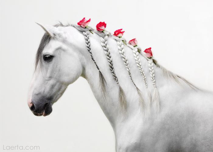 1625406_horse_036 (700x500, 188Kb)