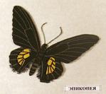 Превью бабочка эпикопея (400x357, 100Kb)