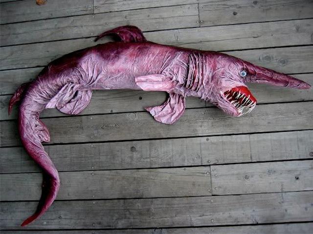 акула-домовой фото 2 (640x480, 265Kb)