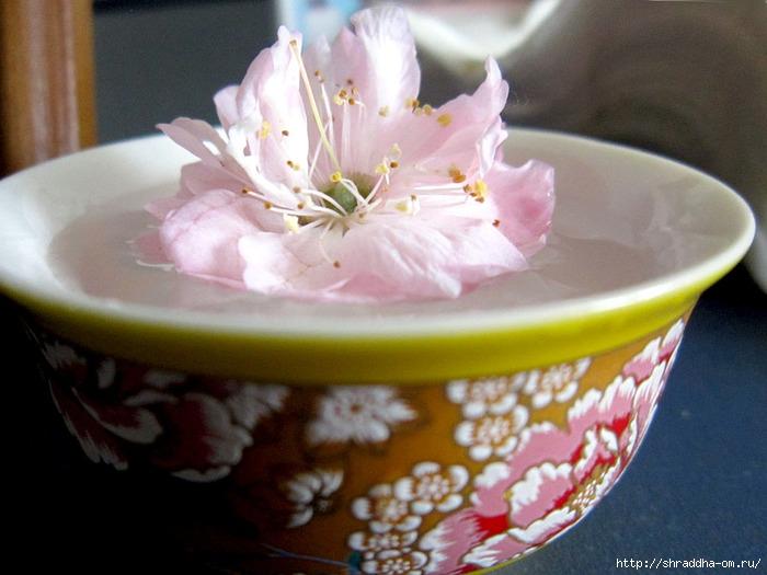 цветок в пиале (700x525, 197Kb)