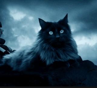 К чему снятся кошки, толкование сна - Детский сад Ру