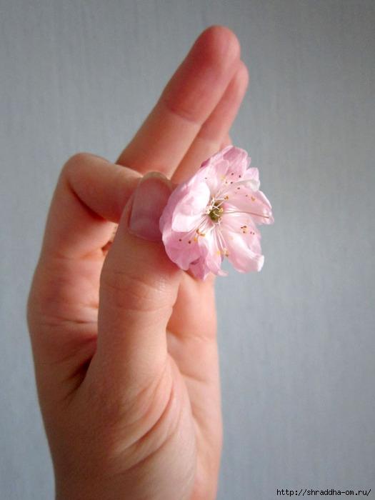 цветок (525x700, 149Kb)