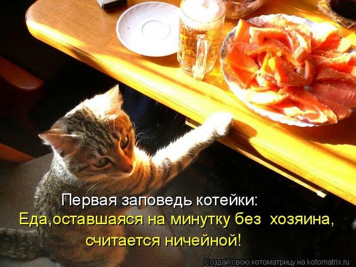 kotomatritsa_bT (700x524, 284Kb)