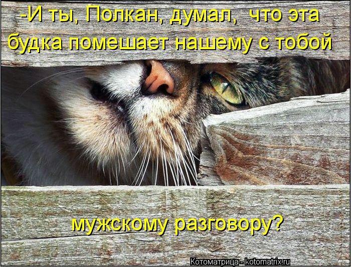 kotomatritsa_EY (700x532, 334Kb)