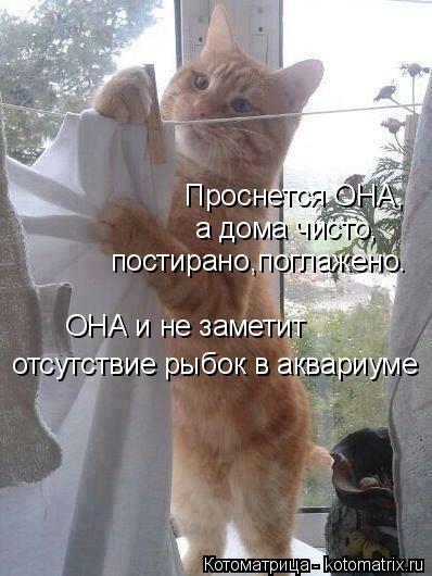 kotomatritsa_H (398x530, 103Kb)