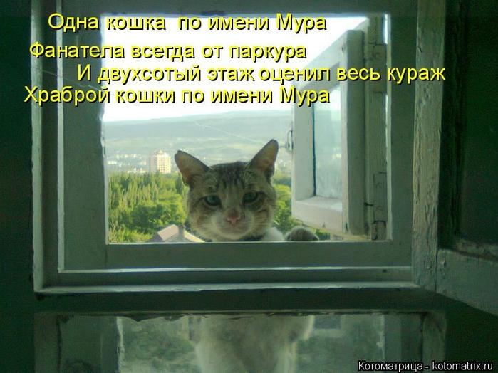 kotomatritsa_R (700x524, 266Kb)