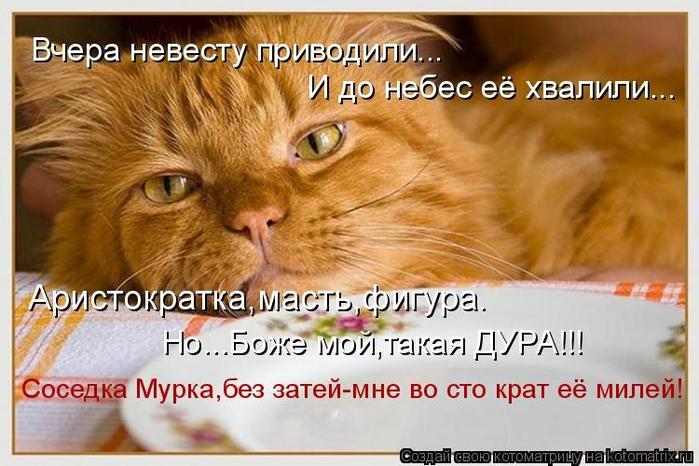 kotomatritsa_s (700x466, 242Kb)