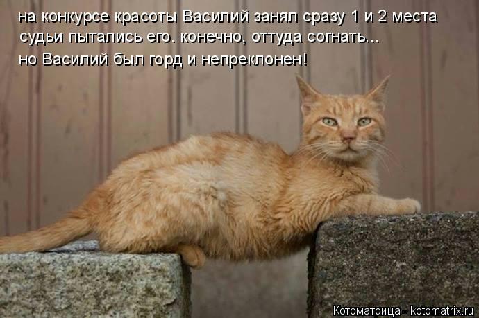 kotomatritsa_W (690x459, 123Kb)