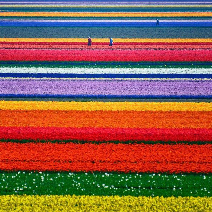 Con los colores del arco iris 112781751_44