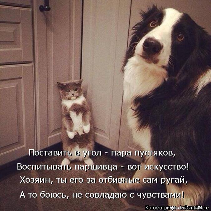 kotomatritsa_aQ (677x677, 240Kb)