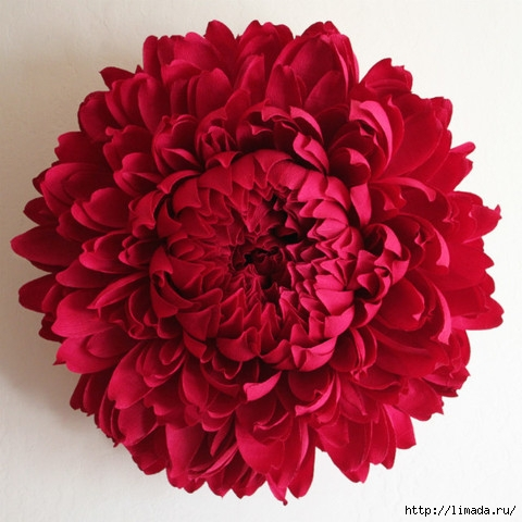 chrysanthemum-I_large (480x480, 146Kb)