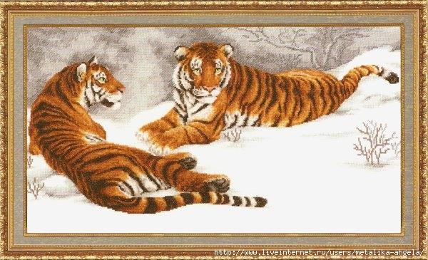 ДЖ-020 Амурские тигры (600x365, 180Kb)